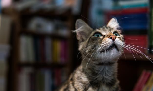 Las mascotas más populares en internet