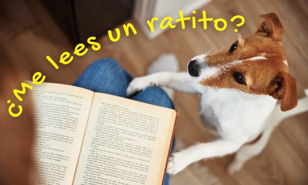 6 perros –inolvidables y extraordinarios– en la literatura